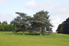 Park w Blenheim w Oxfordshire okręgu - Walia zdjęcia royalty free
