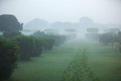 Park w India, Mehtab - Bagh. Zdjęcie Stock