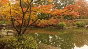 Park w jesieni Zdjęcie Royalty Free
