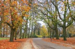Park w sezonie jesiennym Zdjęcia Royalty Free