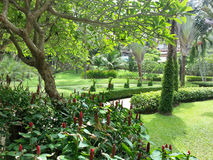 Park w Tajlandia Zdjęcia Royalty Free