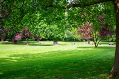 Park w wiośnie, Wiesbaden, Niemcy fotografia royalty free