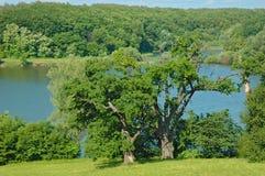 Park w wiosce Kachanivka Zdjęcia Royalty Free