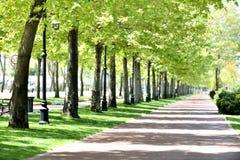 Park w wiosna obraz royalty free