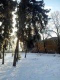 Park w zima śniegu zdjęcie royalty free