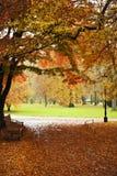 Park w zimie Fotografia Stock