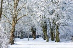 Park w zimie Zdjęcia Royalty Free
