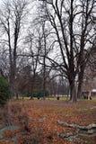Park w zimie w Mediolan Obraz Stock