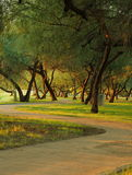 Park walkway. Through the trees at sunset royalty free stock images