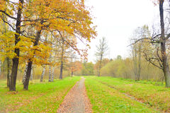 Park and walkway at autumn. Royalty Free Stock Photography