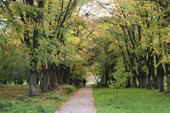 Park walkway in autumn Royalty Free Stock Photography