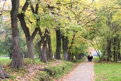 Park walkway autumn Stock Image