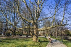 Park in Warsaw. Warsaw, Poland - April 2, 2017: Old couple on a bench next to large tree in Ujazdow Park in Warsaw city stock photography