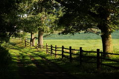Park way Stock Photography
