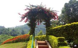 Park way and arch. At kateri park near ooty, tamilnadu, india Stock Photos