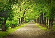 Park way Stock Image