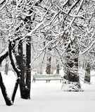 Park in winter Royalty Free Stock Images