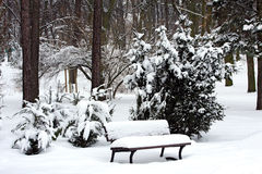 Park in winter. With snow royalty free stock image