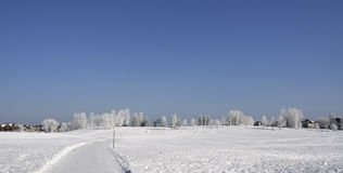 Park in winter. Photo taken in the park in snowy winter Royalty Free Stock Photo