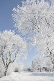 Park in winter. Photo taken in the park in snowy winter Stock Images