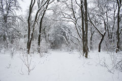 The Park in winter. The road from park in winter Stock Image