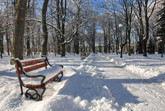 Park in winter Royalty Free Stock Photography