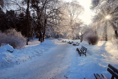 Park on winter afternoon. With sun rays royalty free stock photography