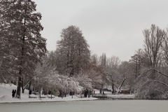 Park in winter Royalty Free Stock Image
