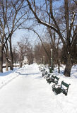 Park in winter Royalty Free Stock Photo
