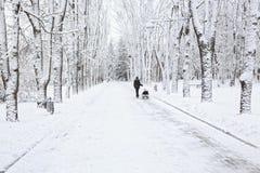 Park in winter. Stock Photos