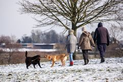 Dog walkers in the park in the winter stock image