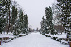 Park in winter covered with snow Royalty Free Stock Image
