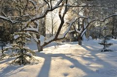 Park on a Winter Day Sunset Royalty Free Stock Photos