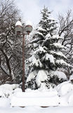 Park in winter - RAW format Royalty Free Stock Photo