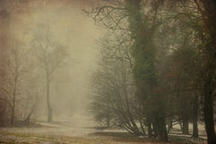 Park in the winter after first snow in fog Royalty Free Stock Photo