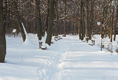 Park in winter Stock Photography