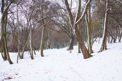 Park in the winter Royalty Free Stock Photos