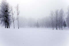 Park in winter. Photographed close-up of the tops of trees in the winter season Stock Image