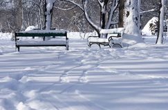 Park in winter, raw Royalty Free Stock Photos