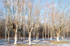 Park during the winter. Royalty Free Stock Image