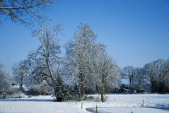 Park in the winter snow. View of a park in the winter snow stock photos