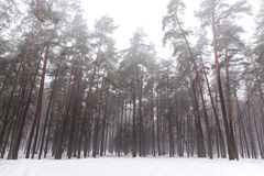 Park in winter with snow and fog Stock Photography