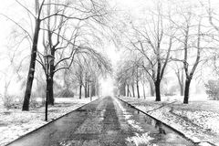 Wet road and trees in snow black white Royalty Free Stock Images