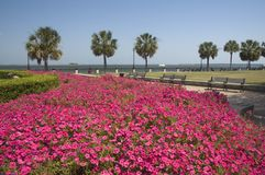 Free Park With Pink Flowers Royalty Free Stock Images - 3432409