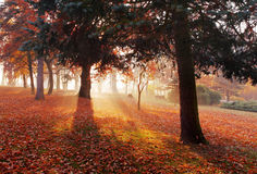 Park with wood - Autumn Royalty Free Stock Photos