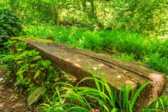 Park wood bench. Big chopped wood log as bench in the summer park with old trees and footpath stock images