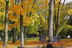 Autumn. Yellow trees. Benches. A park. Yellow trees. Benches stock photography