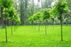 Park with young trees Royalty Free Stock Photos