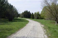Park z długą drogą wzdłuż drzew Długa droga wzdłuż drzew Obrazy Stock