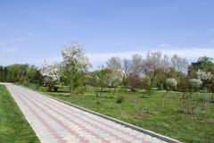 Park z długą drogą wzdłuż drzew Park z długą drogą wzdłuż drzew Piękny ranku światła park publicznie Zdjęcie Royalty Free